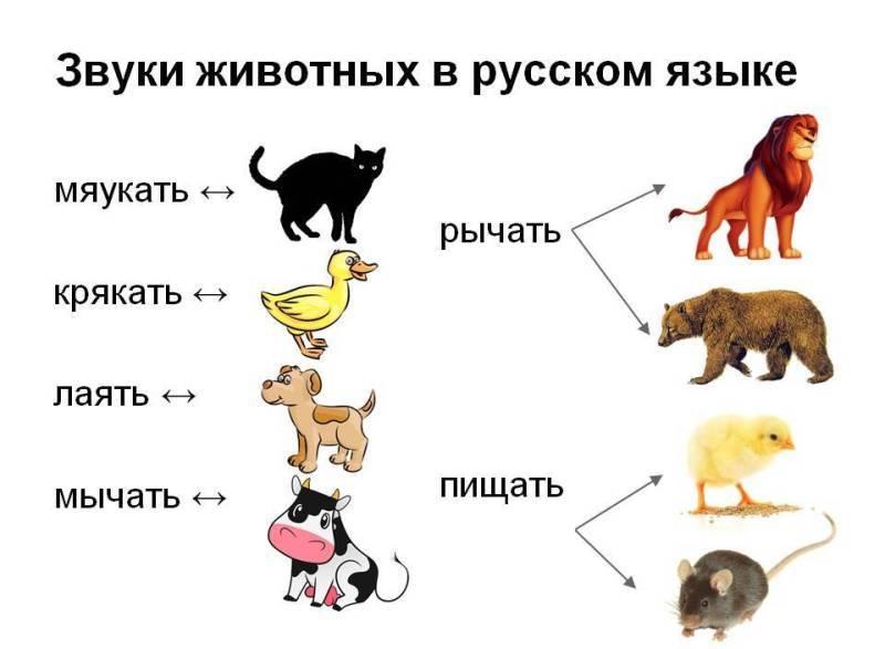 11 звуков, которые издают кошки и что они значат — сайт эксперта по животным — howmeow