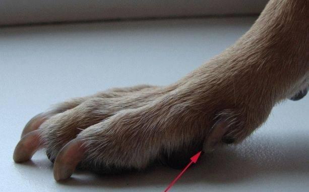 Сколько пальцев у кошки: какое количество считать нормой