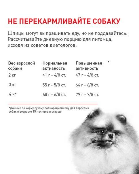 Померанский шпиц (померанец): фото и характер собаки, уход