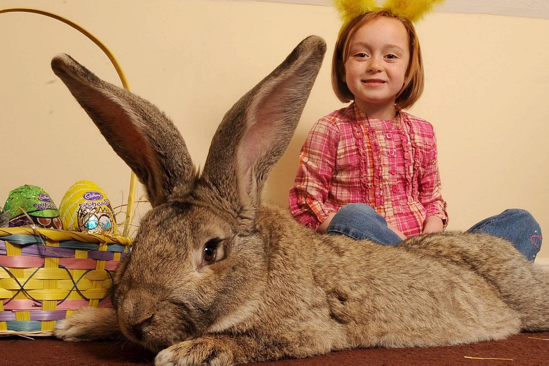 Список имен для кролика-мальчика: как назвать домашнего питомца