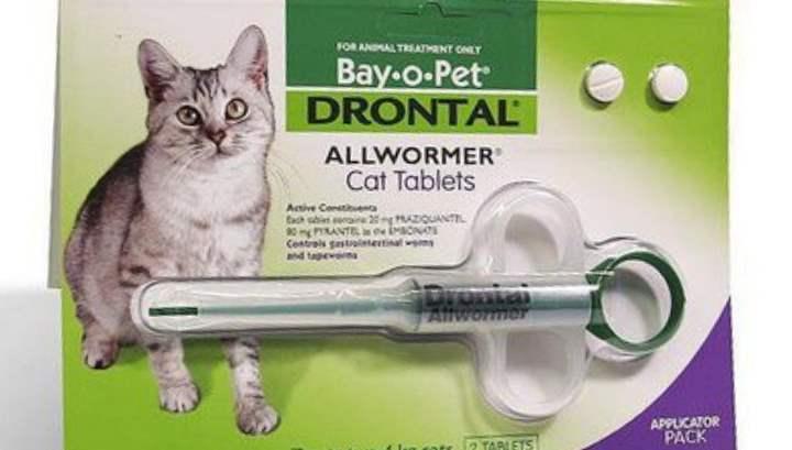 Как дать коту таблетку?