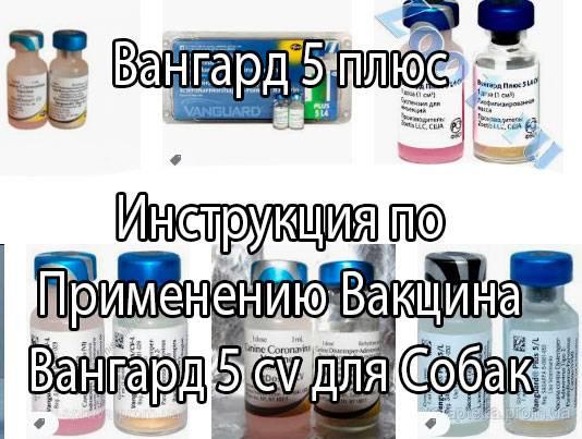 Вангард 5 плюс│ инструкция по применению вакцина вангард 5 cv для собак