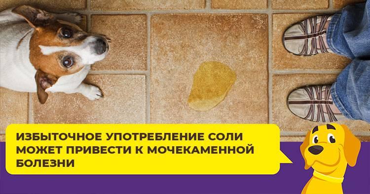 Натуральное кормление собак: плюсы и минусы, разрешенные и запрещенные продукты, режим кормления, меню на неделю