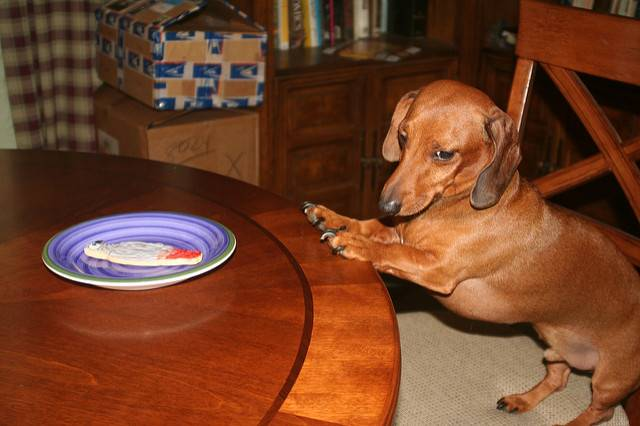 Как правильно кормить собаку сухим кормом: 5 принципов