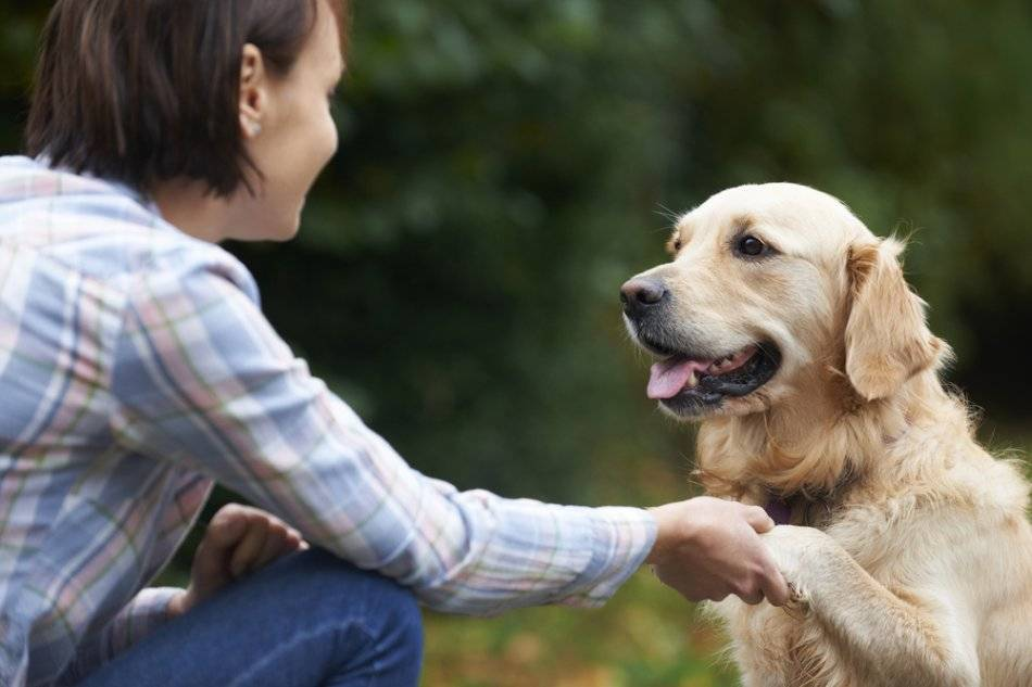 Очеловечивание и другие ошибки воспитания, которые больше всего вредят вашей собаке