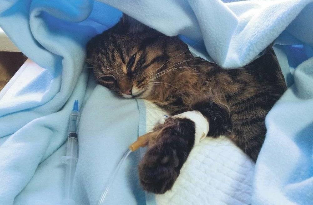 Кот умер: как пережить смерть и похоронить животное