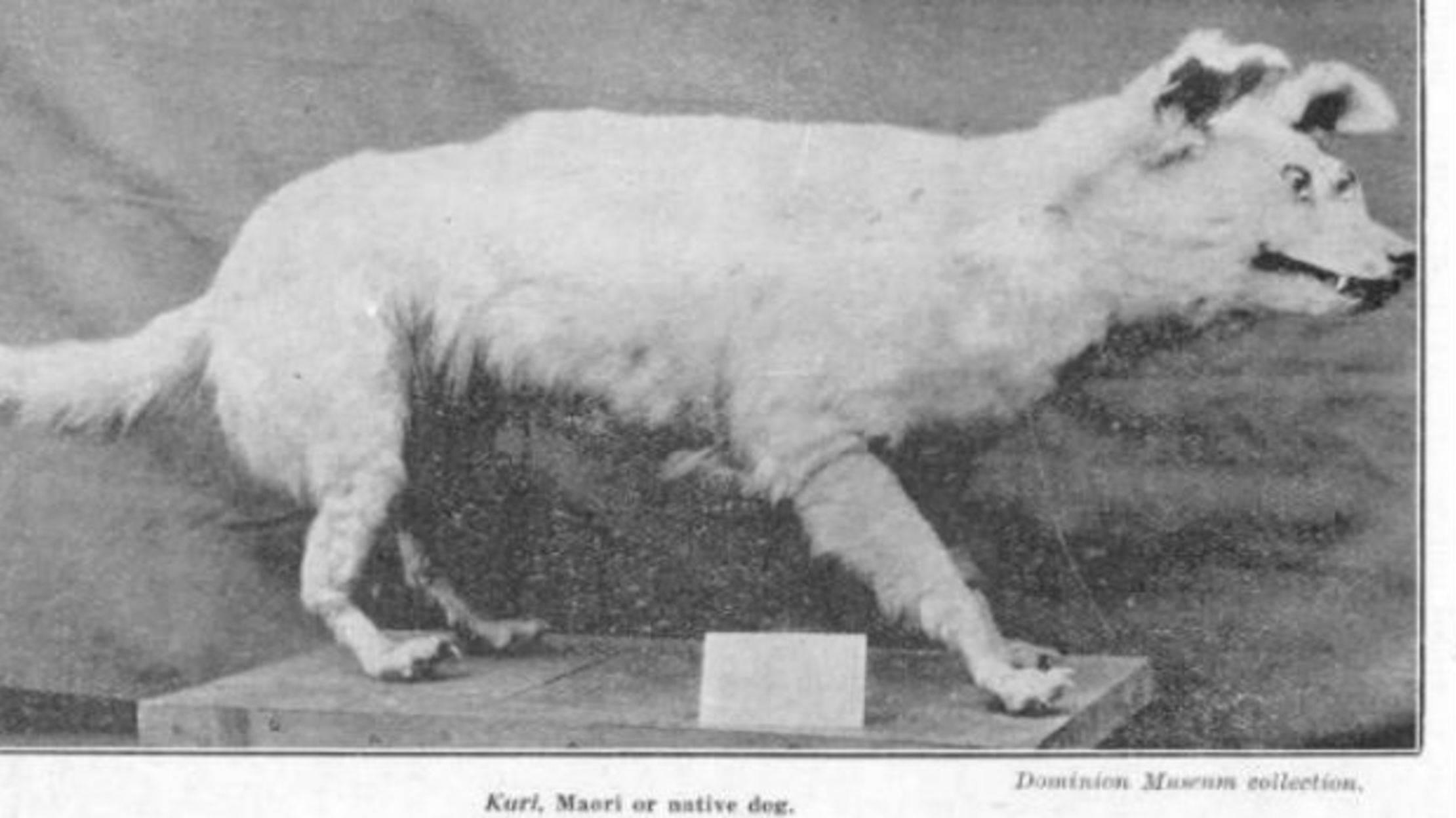 Породы собак, которые уже вымерли