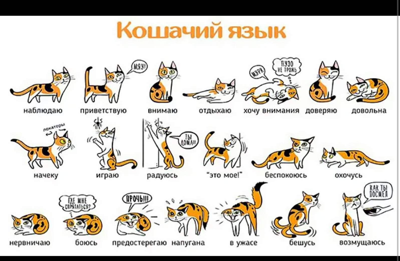 Перевод с кошачьего языка » kuguarlend