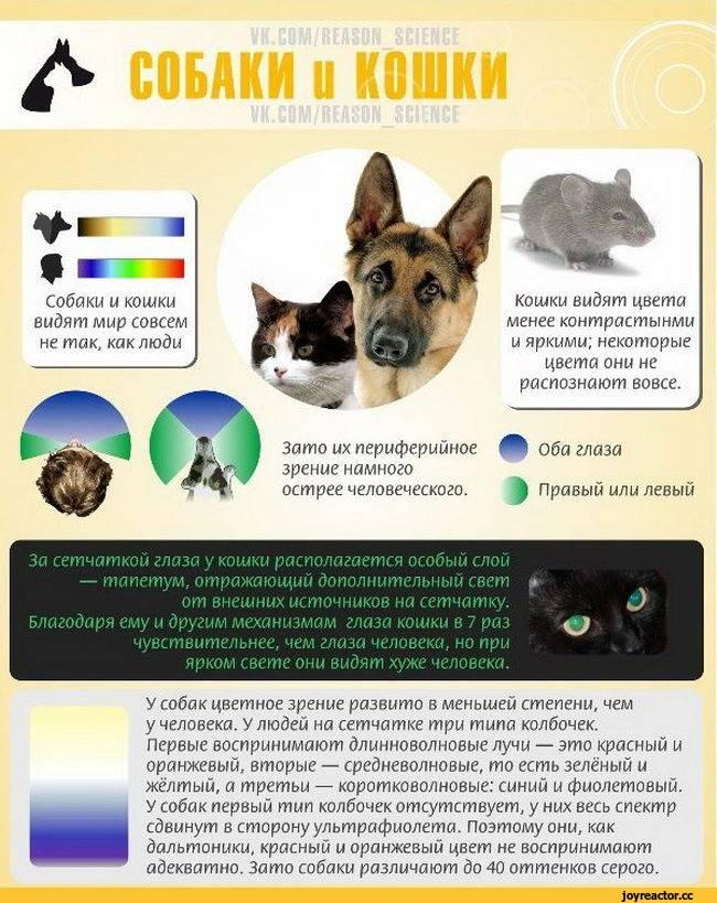 Различают ли собаки цвета | какие цвета видят