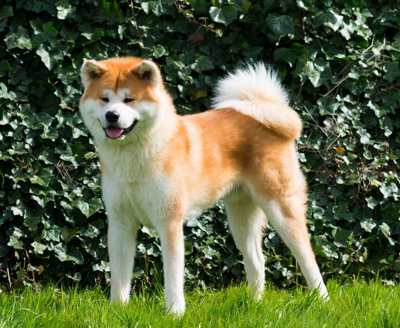 Карликовые породы собак с фото и названиями