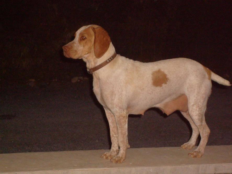 12 редких пород собак, заводчики которых смогут хорошо заработать
