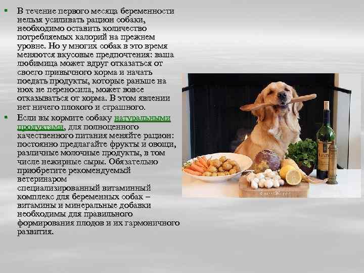 Чем и как правильно кормить собаку