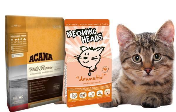 Корм холистик для кошек: что это такое, преимущества и недостатки