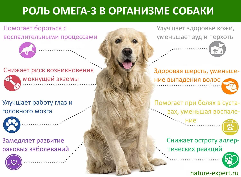 Чем кормить собак, кроме сухого корма?