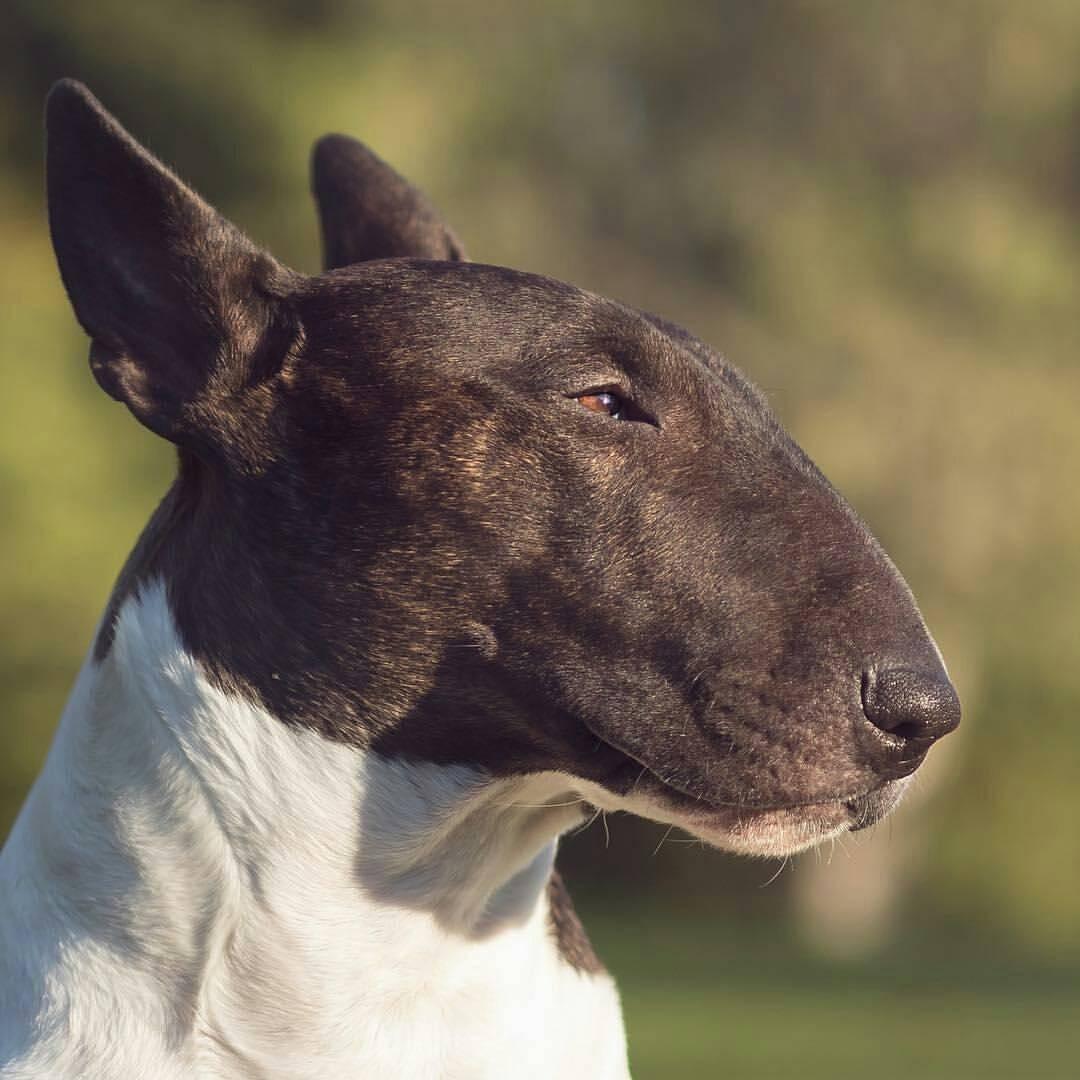 Собака с крысиной мордой: уход и содержание, советы, болезни
