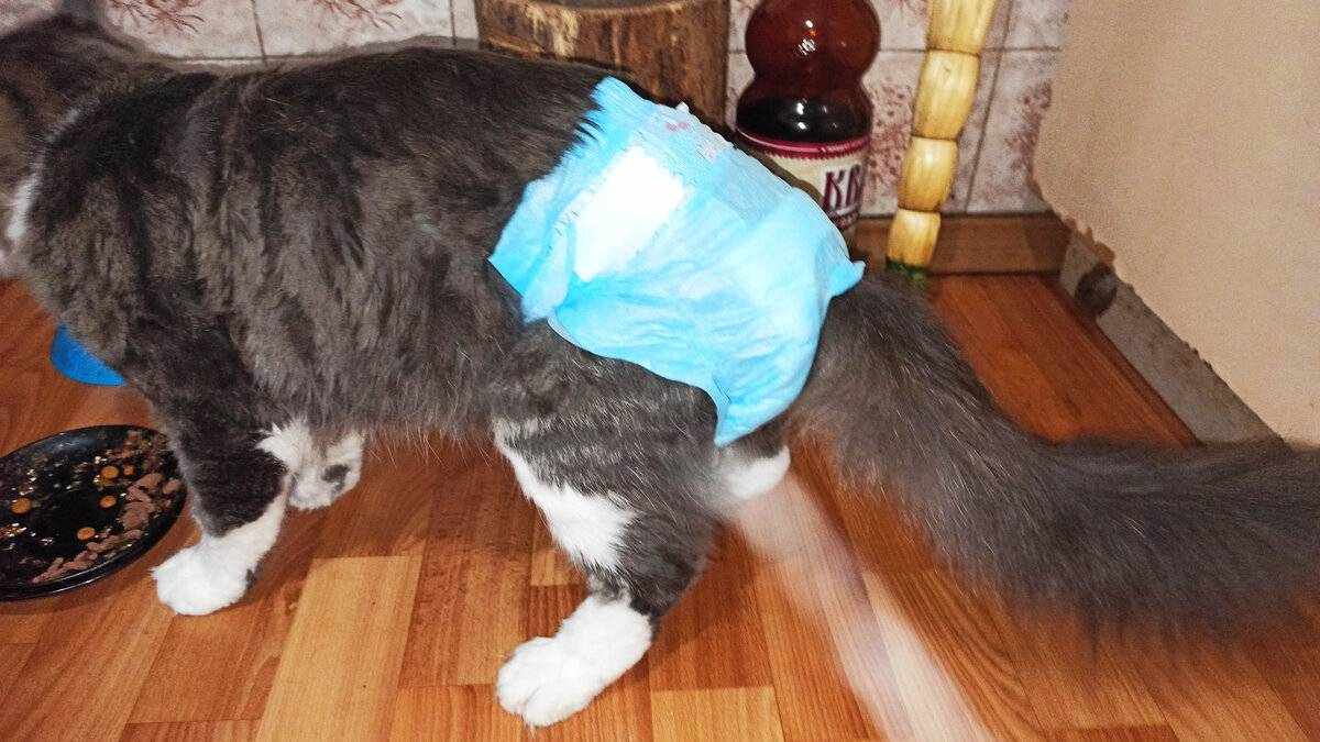 Памперсы для кошек - страна мам