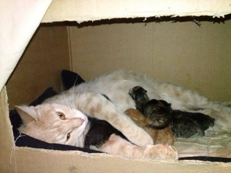 Домик для кошки: как выбрать и сделать кошачий дом и гамак, например, из коробок, как приучить кота к ним, полезные фото и видео