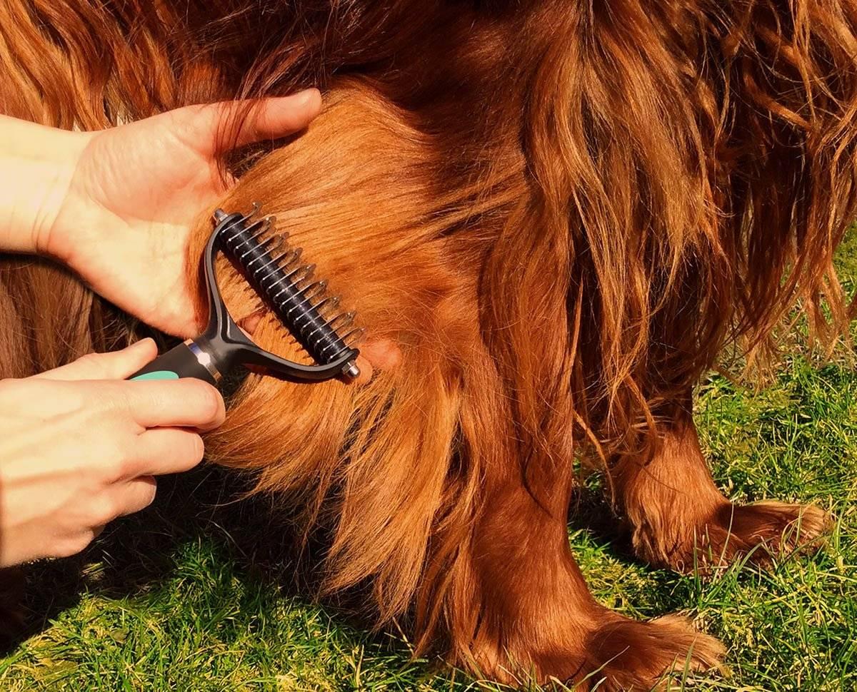 Уход и содержание той-терьера: основные правила и как приучить собаку к лотку или пеленке