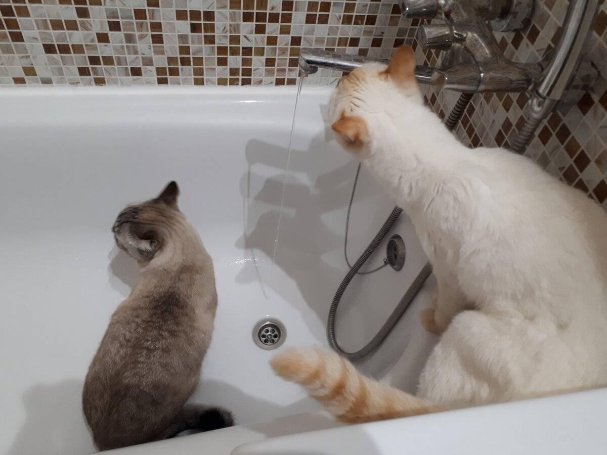 Как искупать кошку если она боится воды и царапается