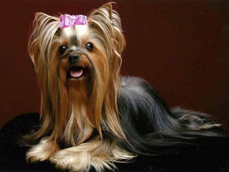 Маленькие породы собак: фото, названия и описание