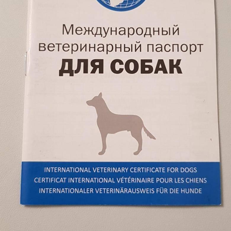 Ветеринарный паспорт для кошек