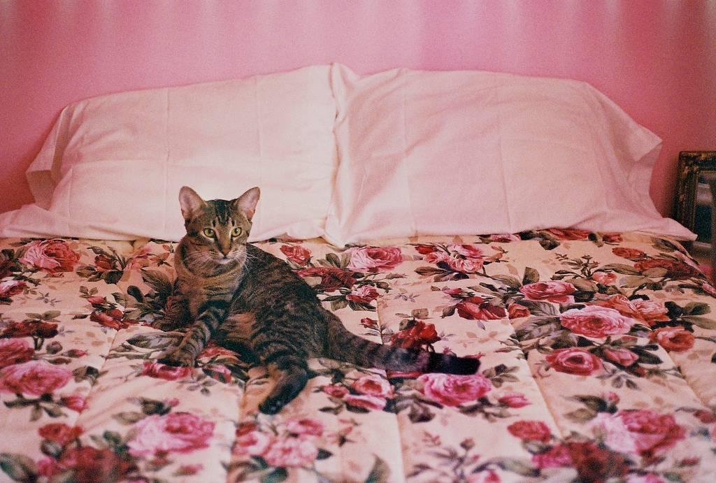 Почему кошки и коты гадят и писают в постель хозяев | начали гадить в кровать