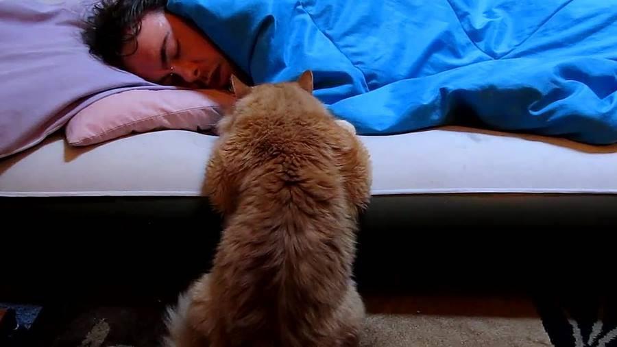 Почему кошка спит у головы человека: как отучить