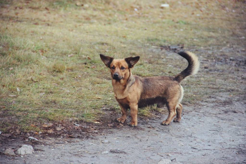 Сколько человеческих лет живут собаки. сколько живут собаки дворняжки? как продлить жизнь любимому питомцу - новая медицина