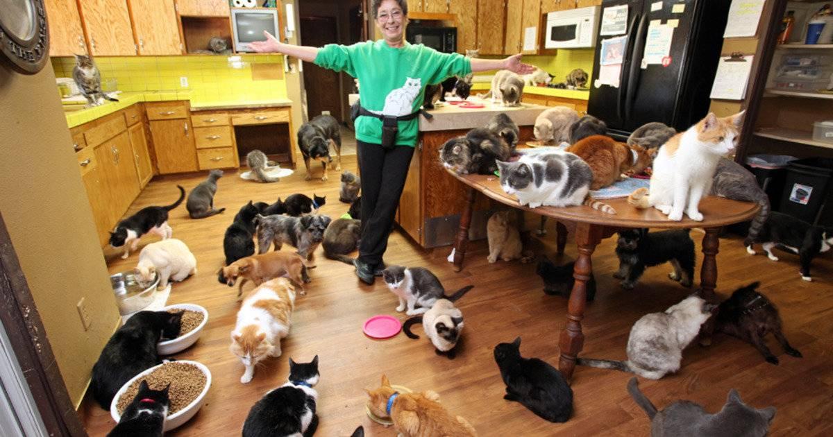 Какую породу кошек выбрать для квартиры - лучшие породы