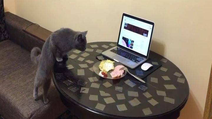 Как отучить кошку лазить по столам? практические советы