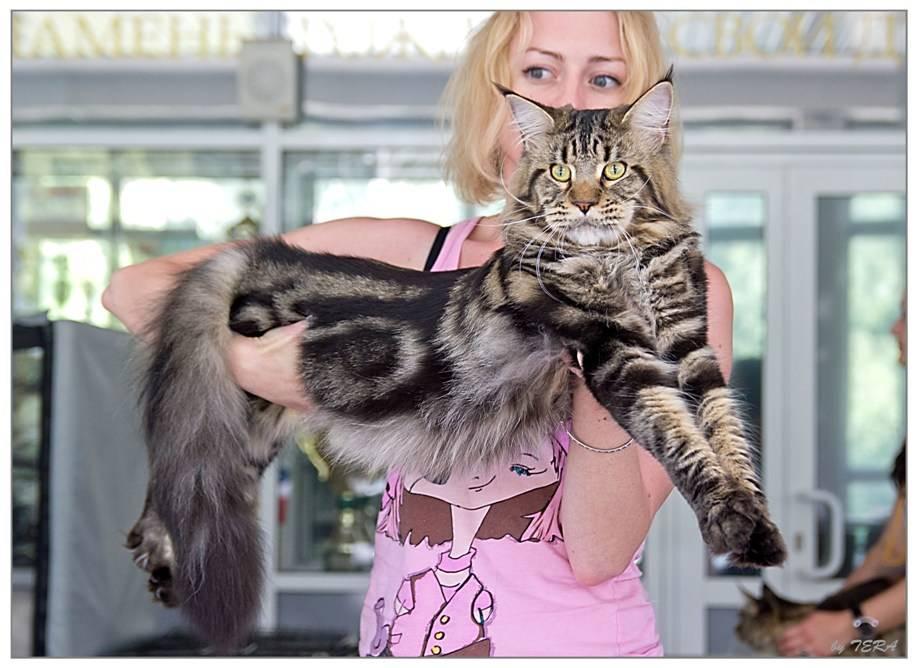 Самые добрые и ласковые породы кошек в мире: названия с фото и описанием