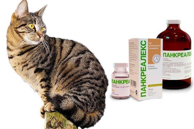 Сахарный диабет у собак и кошек — диагностика и лечение