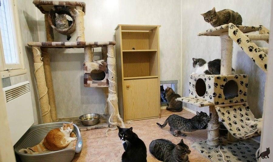 19 причин, почему каждому нужен свой кот!!!))