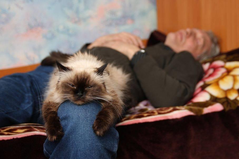 Сколько спят коты и от чего зависит продолжительность их сна?