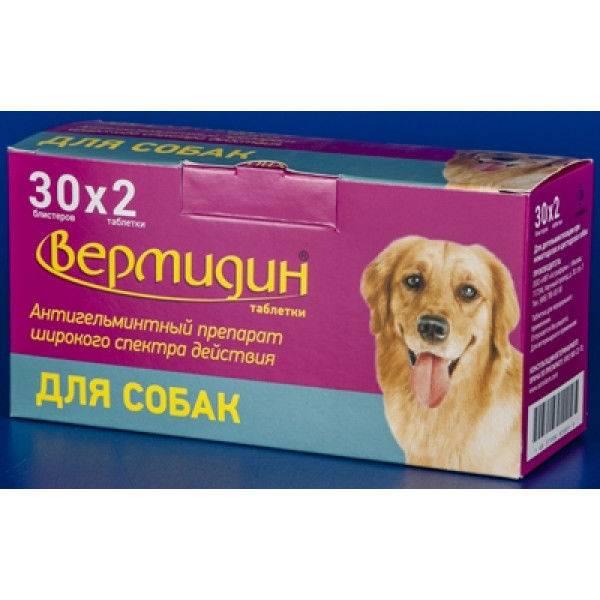 Вермидин для собак: инструкция по применению