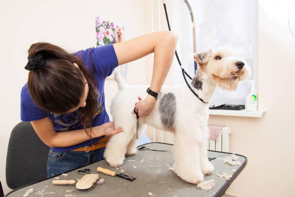 Чем стригут собак и как правильно делать стрижку псу в домашних условиях
