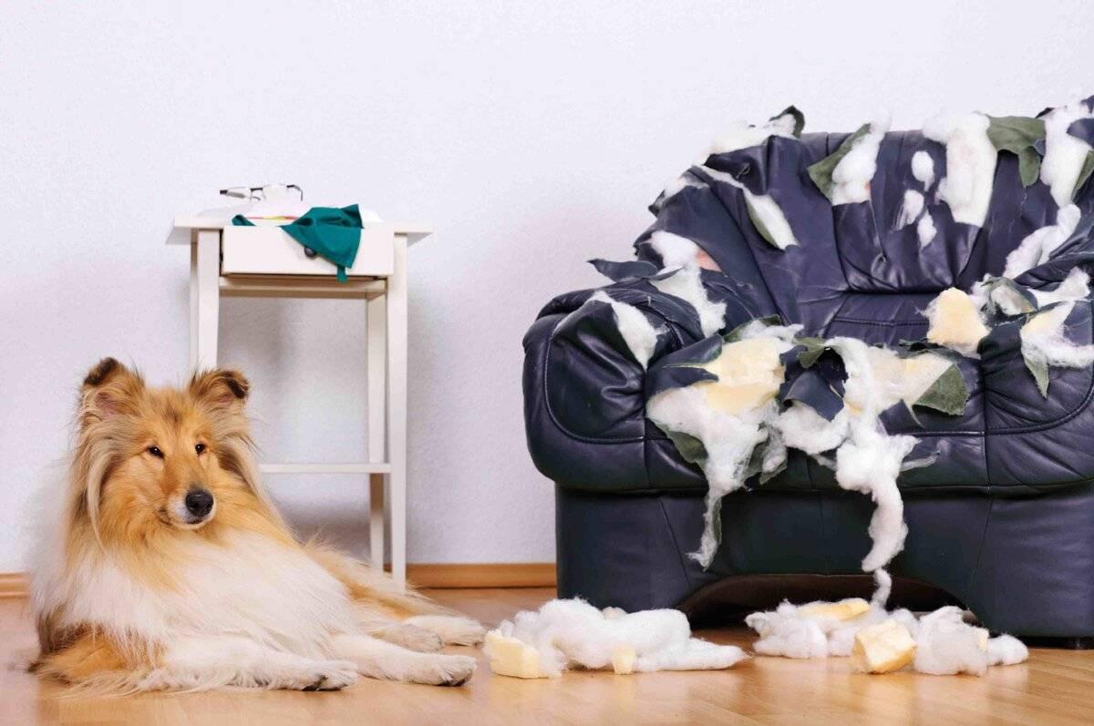 Как отучить собаку метить углы и писать дома