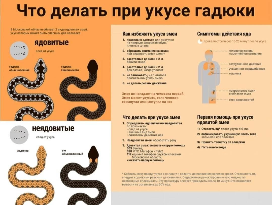 Где собаку может укусить змея? как оказать собаке первую помощь при змеином укусе?