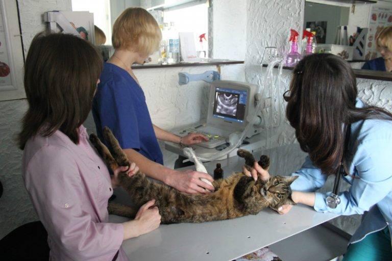 Респираторные болезни кошек