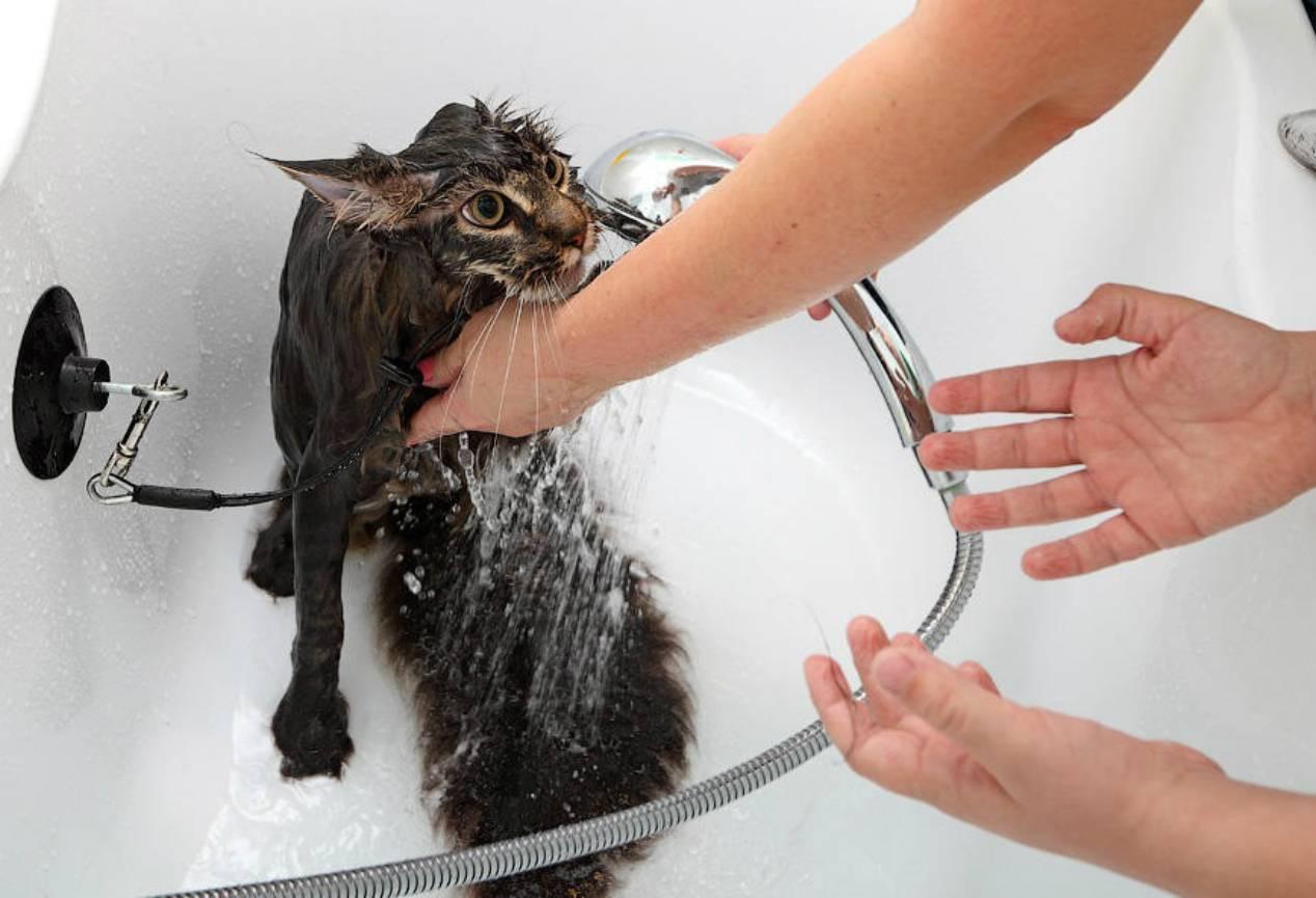 Почему кошки боятся воды — легенды и реальные причины