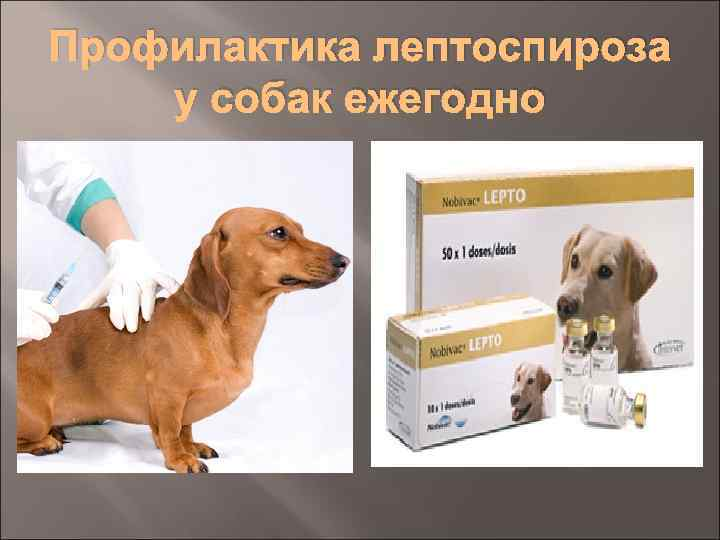 Вирусные инфекции у собак.