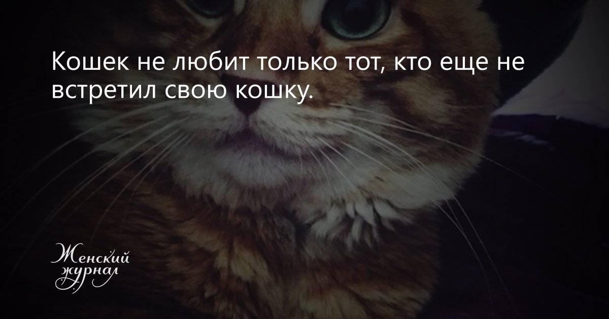 Топ-10 вещей, которые не любят кошки