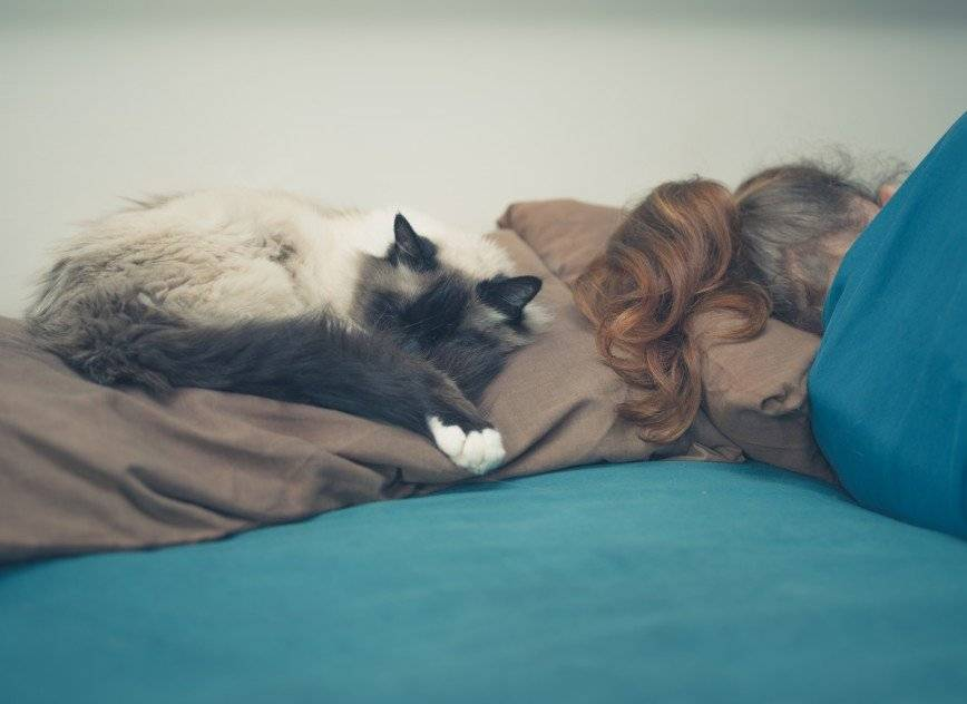 Стоит ли пускать собаку спать в одной постели с хозяином