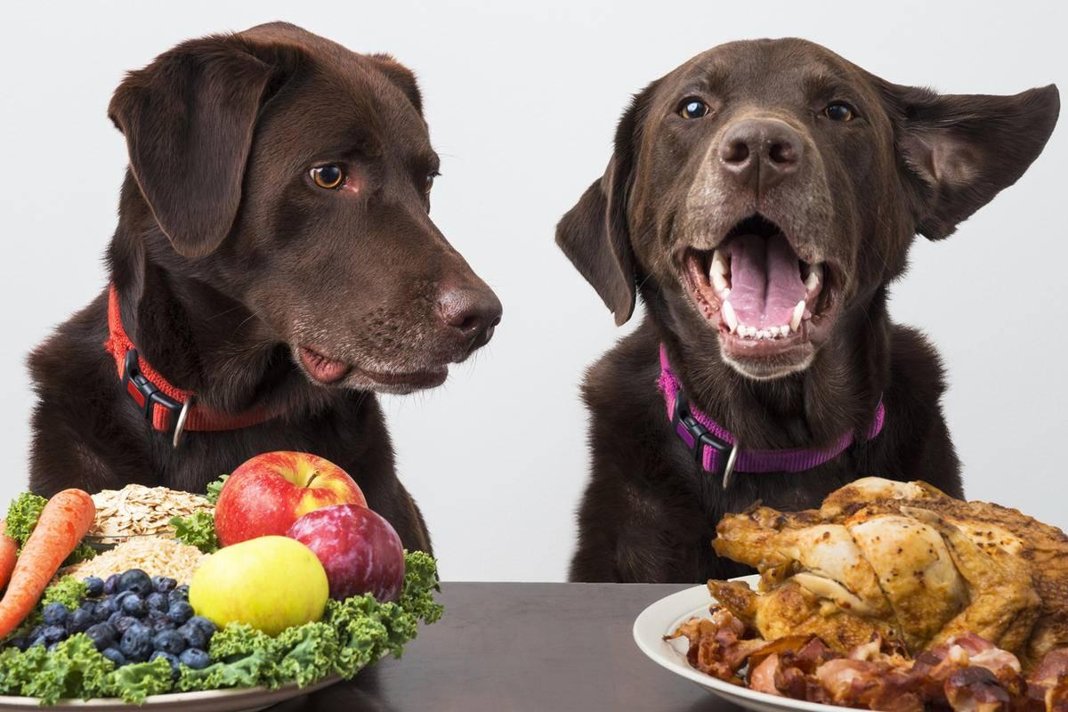 Чем кормить собаку: как правильно и каким кормом лучше, можно ли кошачьим, сколько раз в день, чем нельзя и почему, а также до прогулки или после