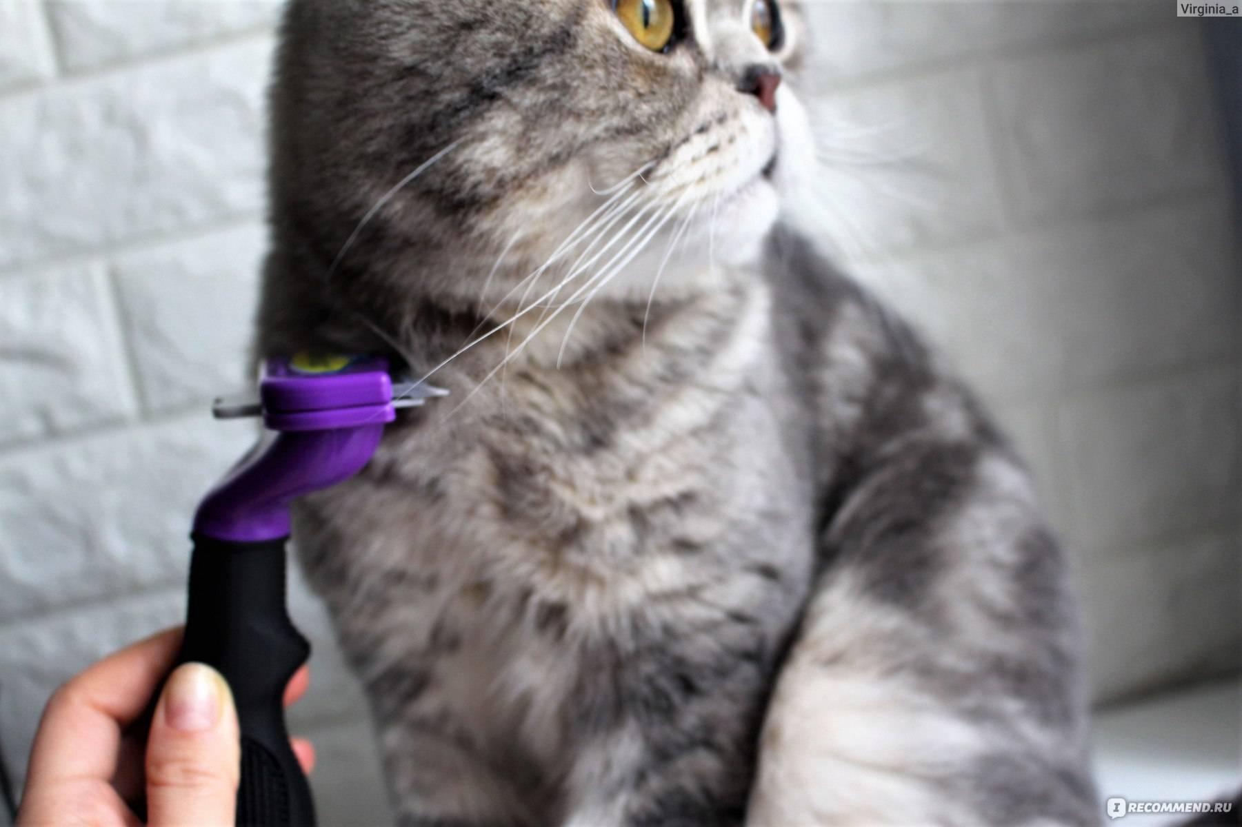 Почему кошка сильно линяет и что делать?