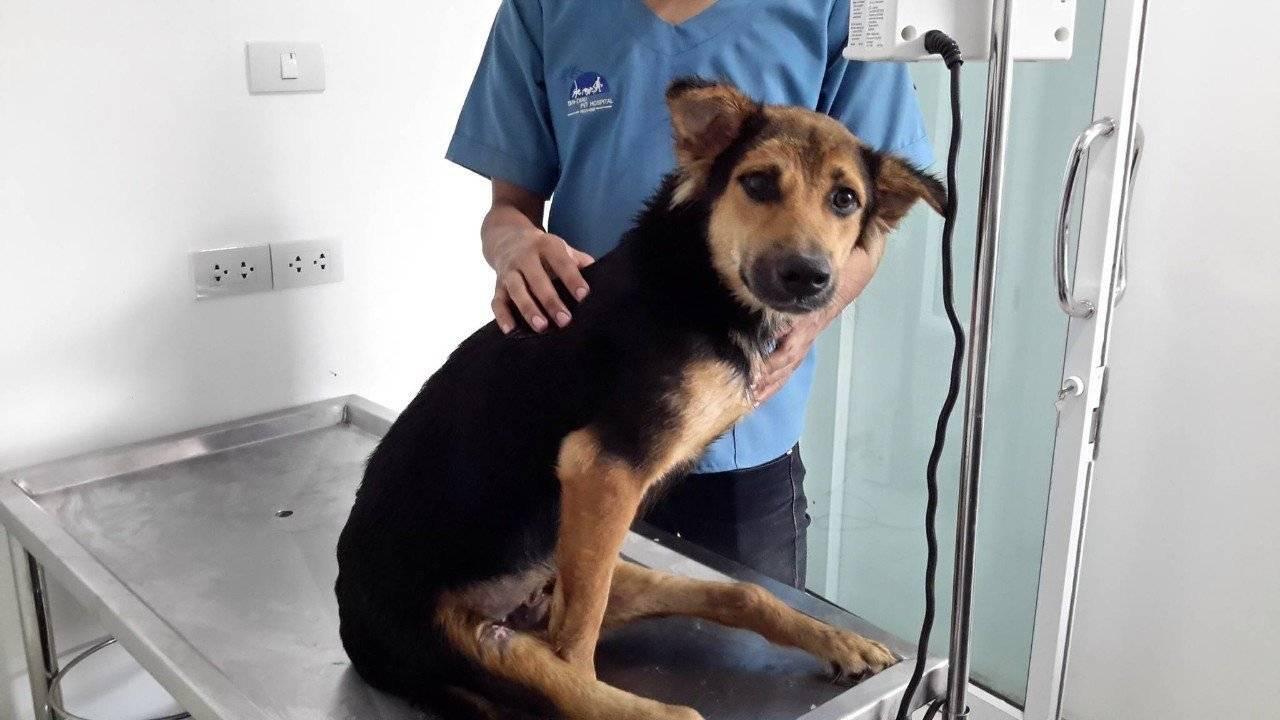 У собаки отказывают лапы – сигнал о наличии серьезных проблем со здоровьем! что делать если у щенка отказали лапы?