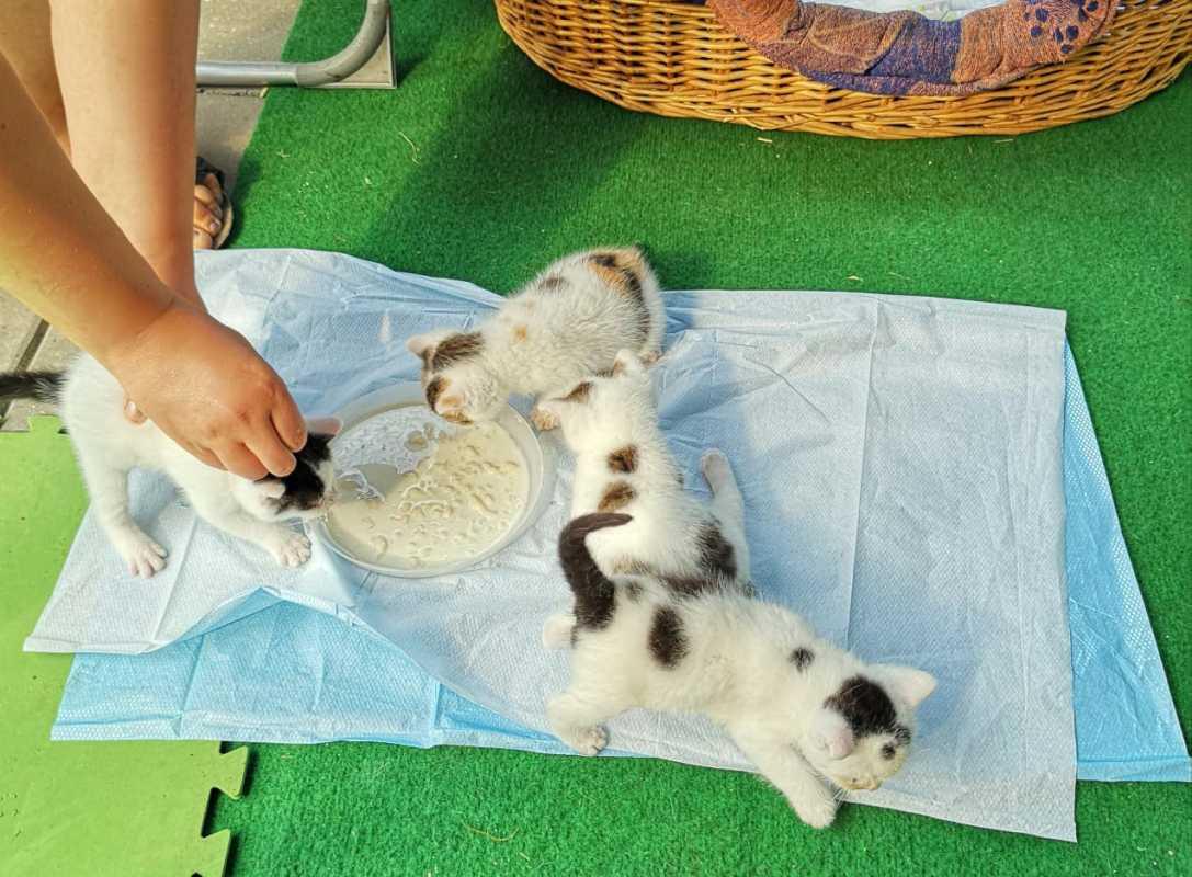 Как растут котята по месяцам: рацион, контроль веса