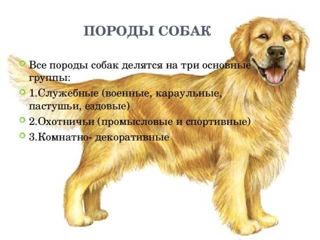 Породы собак ркф