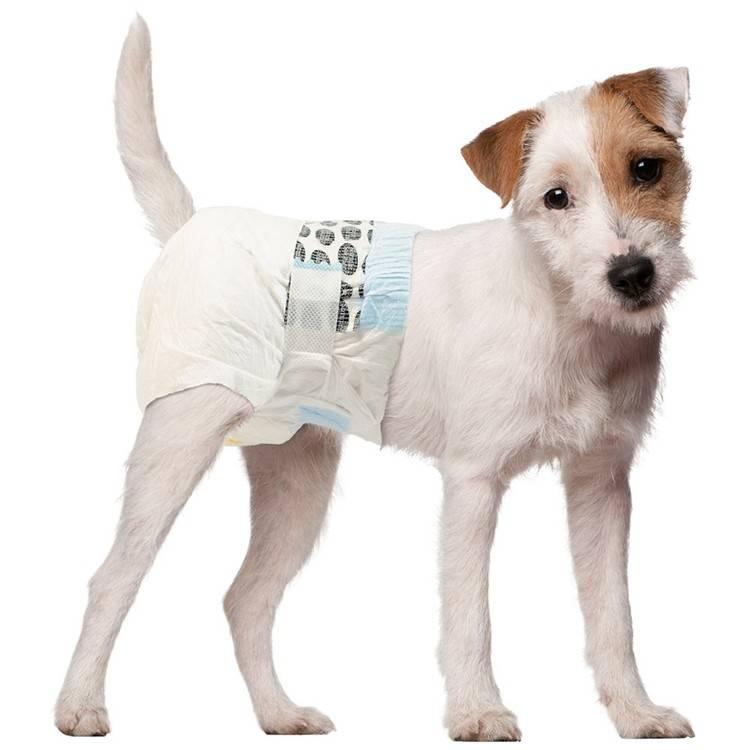 Памперсы для собак: 100 фото и видео советы как приучить собаку носить памперсы