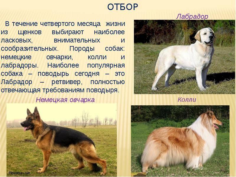 Агрессивные породы собак. описание, названия и фото самых агрессивных собак